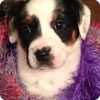 Adopt A Pet :: Harlyn - Allentown, PA
