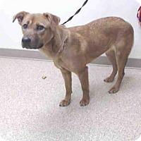 Adopt A Pet :: MINNIE - Palmer, AK