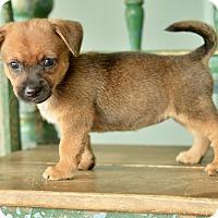 Adopt A Pet :: Bagel - San Antonio, TX