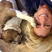 Adopt A Pet :: Duece - Atlanta, GA