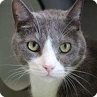 Adopt A Pet :: Mister - Sarasota, FL