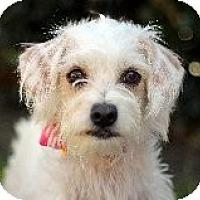 Adopt A Pet :: Topsy @ Petsmart in SLO Sat. - Atascadero, CA