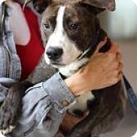 Adopt A Pet :: Eddy NEEDS ADOPTER ASAP!! - Sacramento, CA