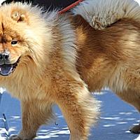 Adopt A Pet :: Nickoli - Tucker, GA