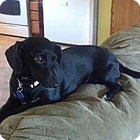Adopt A Pet :: Hazel Lu (Sponsored) - Hancock, MI