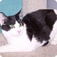 Adopt A Pet :: K-Emery8-Mickey - Colorado Springs, CO