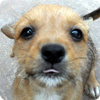 Adopt A Pet :: Stanbury - Adoption Pending - Oakley, CA