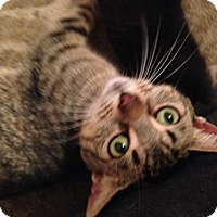 Adopt A Pet :: Hattie - Hamilton, ON