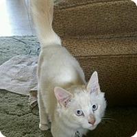 Adopt A Pet :: Sas - North Highlands, CA