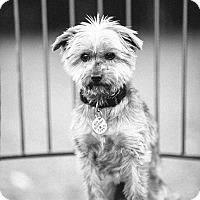 Adopt A Pet :: Itzy - Portland, OR