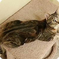Adopt A Pet :: Sammi - Phoenix, AZ