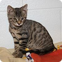 Adopt A Pet :: Sammy (Neutered) - Marietta, OH