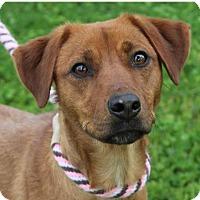 Adopt A Pet :: RACHEL - Red Bluff, CA