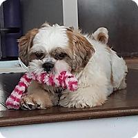 Adopt A Pet :: Bubbles 3250 - Toronto, ON