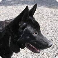 Adopt A Pet :: Trigger - Yucaipa, CA