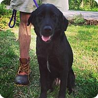 Adopt A Pet :: Ellie - Charleston, SC