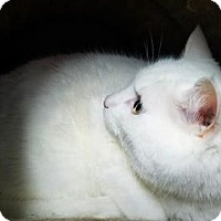 Adopt A Pet :: Fatty - West Des Moines, IA