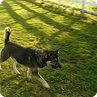 Adopt A Pet :: Radar - Fort Valley, GA
