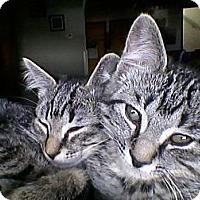 Adopt A Pet :: Jax or  Clhoe - Riverside, RI
