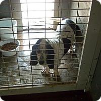 Adopt A Pet :: Lola - Windsor, MO