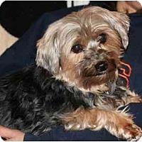 Adopt A Pet :: Piper - Racine, WI