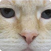 Adopt A Pet :: Mr. Butters - Warren, OH