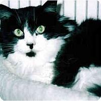 Adopt A Pet :: Mr. Lee - Medway, MA
