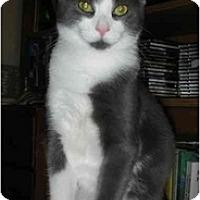 Adopt A Pet :: Teddy - Elmira, ON