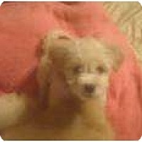 Adopt A Pet :: Prince William - Phoenix, AZ
