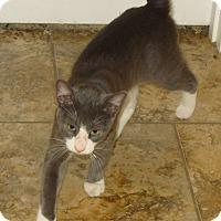 Adopt A Pet :: Oakley - Bentonville, AR
