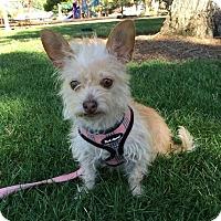 Adopt A Pet :: Blanche - Livermore, CA