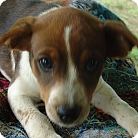 Adopt A Pet :: Jennie - Plainfield, CT