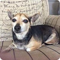 Adopt A Pet :: Bella - Clifton, TX