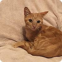 Adopt A Pet :: Sparkle - Palo Cedro, CA