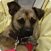 Adopt A Pet :: River - Somerset, KY