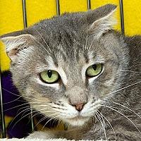 Adopt A Pet :: Scottie M - Sacramento, CA