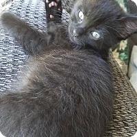 Adopt A Pet :: Kal - Leonardtown, MD