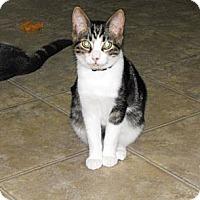 Adopt A Pet :: Holden - Grand Rapids, MI