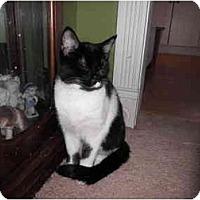 Adopt A Pet :: Amanda - Warren, MI