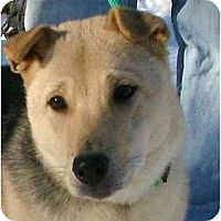 Adopt A Pet :: Fin - Toronto/Etobicoke/GTA, ON