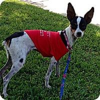 Adopt A Pet :: Jersey - Oceanside, CA