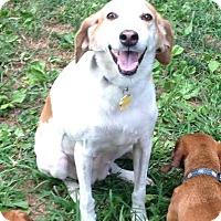 Adopt A Pet :: Susie - Millersville, MD