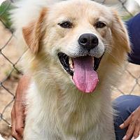 Adopt A Pet :: Juliette - New Canaan, CT