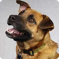 Adopt A Pet :: Martin - Minneapolis, MN
