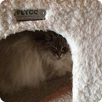 Adopt A Pet :: Anna - Sanford, ME
