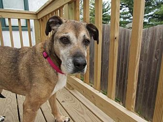 Hound (Unknown Type) Mix Dog for adoption in Gilbertsville, Pennsylvania - Babe - Senior