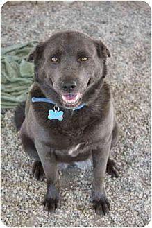 Australian Cattle Dog Mix Dog for adoption in Littlerock, California - Meiko