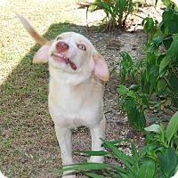 Adopt A Pet :: Moe and Larry - Bunkie, LA