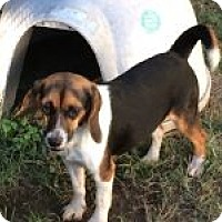 Adopt A Pet :: Grace - Dumfries, VA
