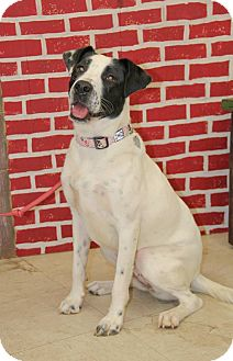 Border Collie Mix Dog for adoption in New Oxford, Pennsylvania - Molly Mae